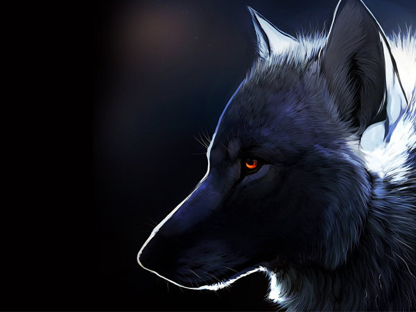 Animal Wallpapers Lobo. Daniel Rodrigues Figueredo - Site Oficial. Animal, Photo, Photography, Picture, Image, Wallpaper, Wallpapers, Background, Lobo.